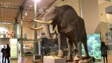 Conferencias en el Museo de Ciencias Naturales