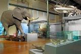 Amigos del Museo de Ciencias Naturales